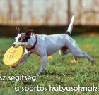 BP Amino Dog Plus – Magas aminosav tartalmú izomtömeg növelő, erősítő kiegészítő kutyáknak