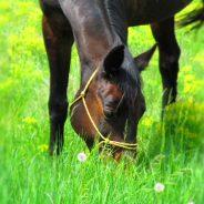 Hasznos kis olvasmány a lovak emésztőrendszeréről