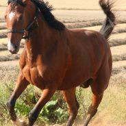 A magnézium szerepe a lovak szempontjából – hogyan működik?