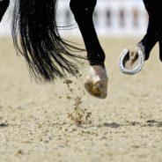 Egészséges ló – egészséges pata