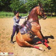 Hogy védheted lovad ízületeit?