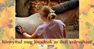 Szőrváltás: lovad szőrére megy a játék